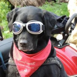 dog-171773_1280 (2)